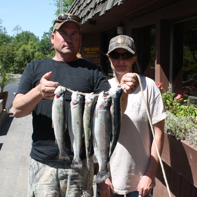 Collins lake trophy trout arrived wednesday 5 3 for Lake gregory fishing report