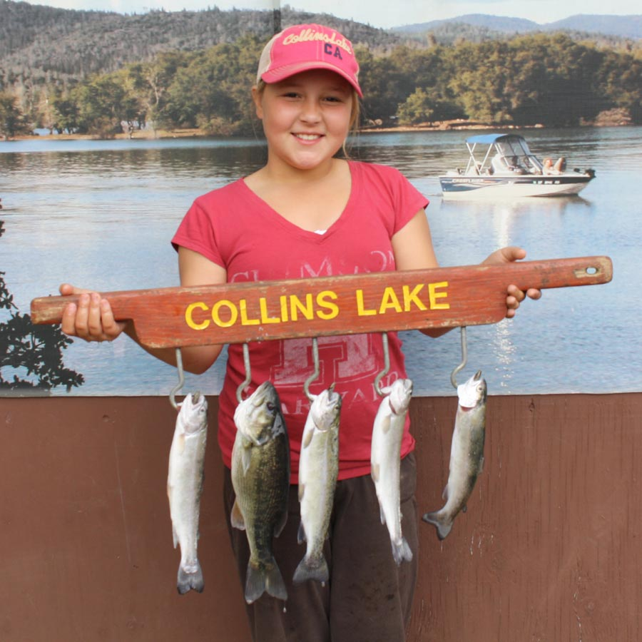Collins lake whopper of the week 13 lb 8 oz trout for Collins lake fishing report